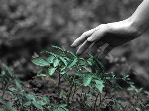 Comunicare la sostenibilità significa creare coinvolgimento e partecipazione intorno a un valore comune.