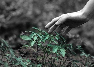 Comunicare la sostenibilità attraverso la cultura del feedback